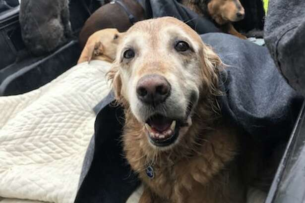 A truck carrying nine dogs crashed into a private residence in San Francisco's Sunset District on Thursday, Nov. 16, 2017, fire officials said.