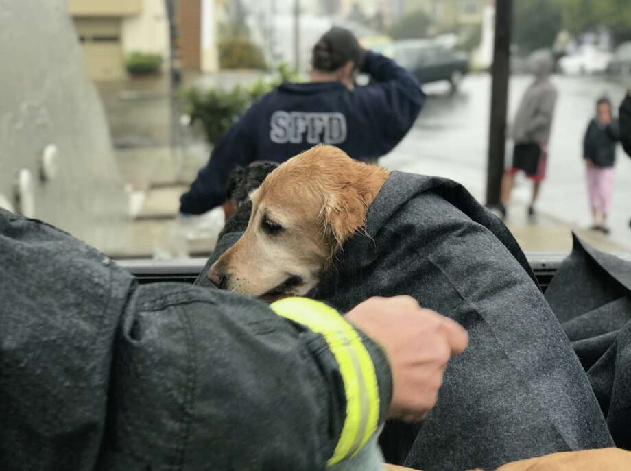 A truck carrying nine dogs crashed into a private residence in San Francisco's Sunset District on Thursday, Nov. 16, 2017, fire officials said. Photo: San Francisco Fire Department