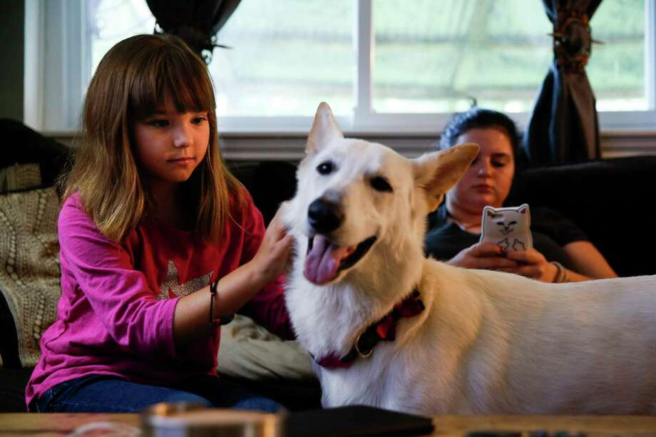 Ava Pettit, 8, plays with the family dog, Zoe, in Webster. Zoe bit Ava in the face while jumping for a treat, and while at an in-network hospital, four out of the five doctors who treated Ava were not in network, leaving the family with a huge bill.  Photo: Michael Ciaglo, Staff / Michael Ciaglo