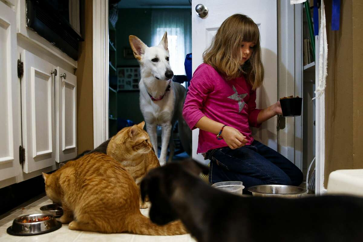 Ava Pettit, 8, feeds her pets, in Webster.