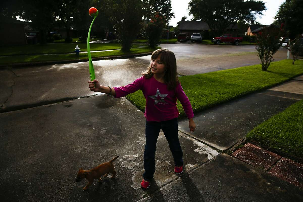 Ava Pettit, 8, throws a ball for her dogs Tuesday, in Webster.