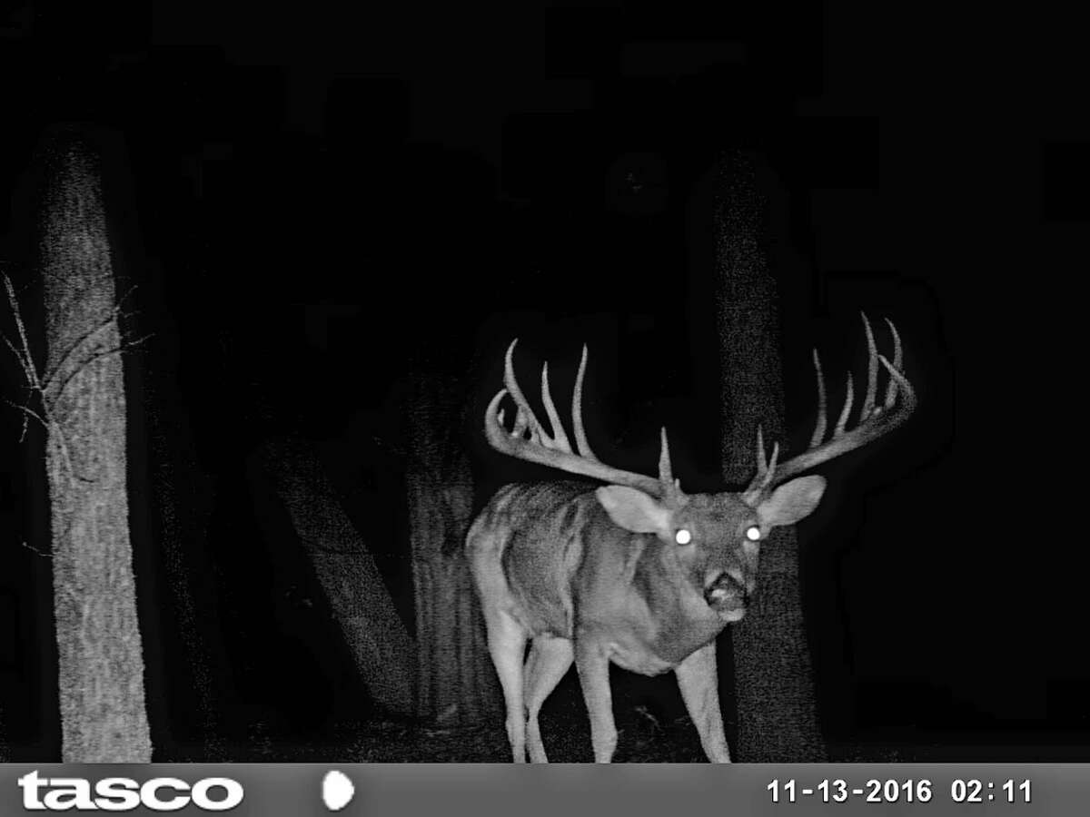 A game camera image of this 19-point buck taken in Grayson County provided evidence refuting John Walker Drinnon's claim he harvested the big deer in Oklahoma.