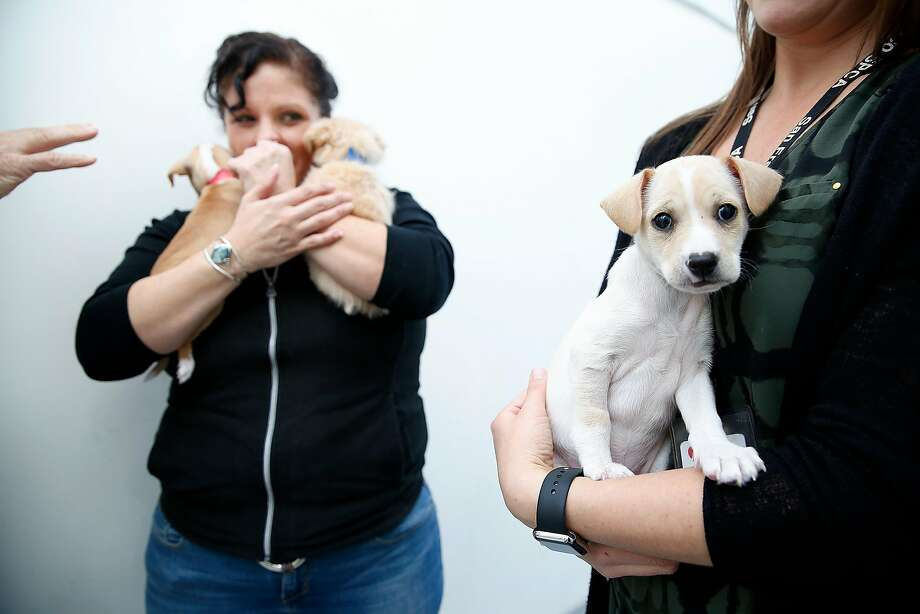 San Francisco SPCA counselor Karen Hernandez (left) carries Turkey and Yams, who were offered up for adoption Friday along with Potato (right) and many other pets at Macy's in Union Square. Photo: Liz Hafalia, The Chronicle