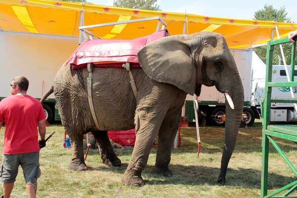 The Commerford family's elephants are used regularly at outdoor venues like the Goshen Fair. Above, one of the three animals in 2015.