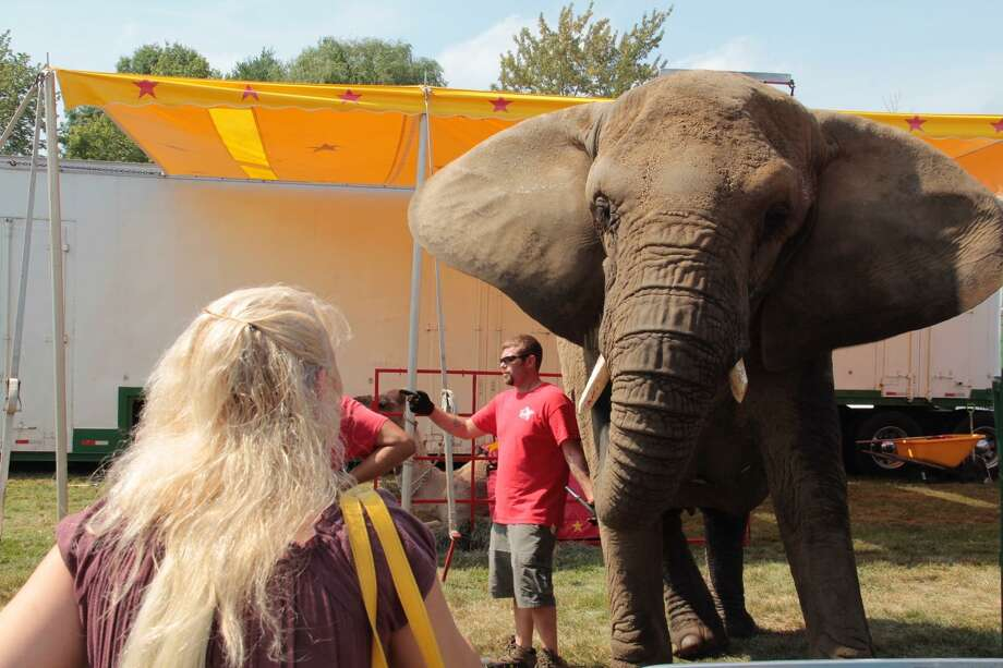 A fair guest at the Goshen Fair in 2015 tries to attract the attention of one of the Commerford family's elephants. Photo: Register Citzen File Photo