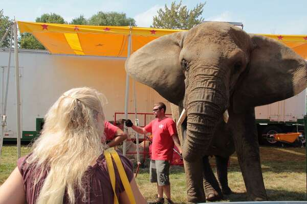 A fair guest at the Goshen Fair in 2015 tries to attract the attention of one of the Commerford family's elephants.