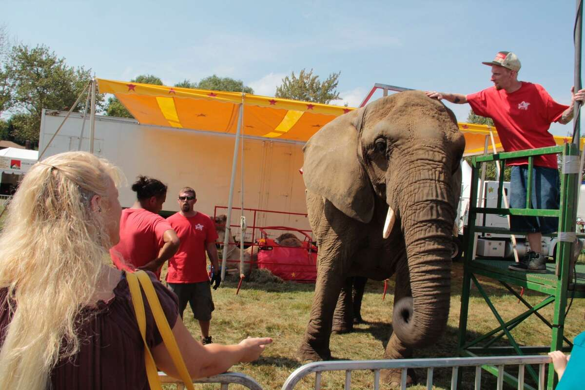 A Commerford elephant at the Goshen Fair in 2015.
