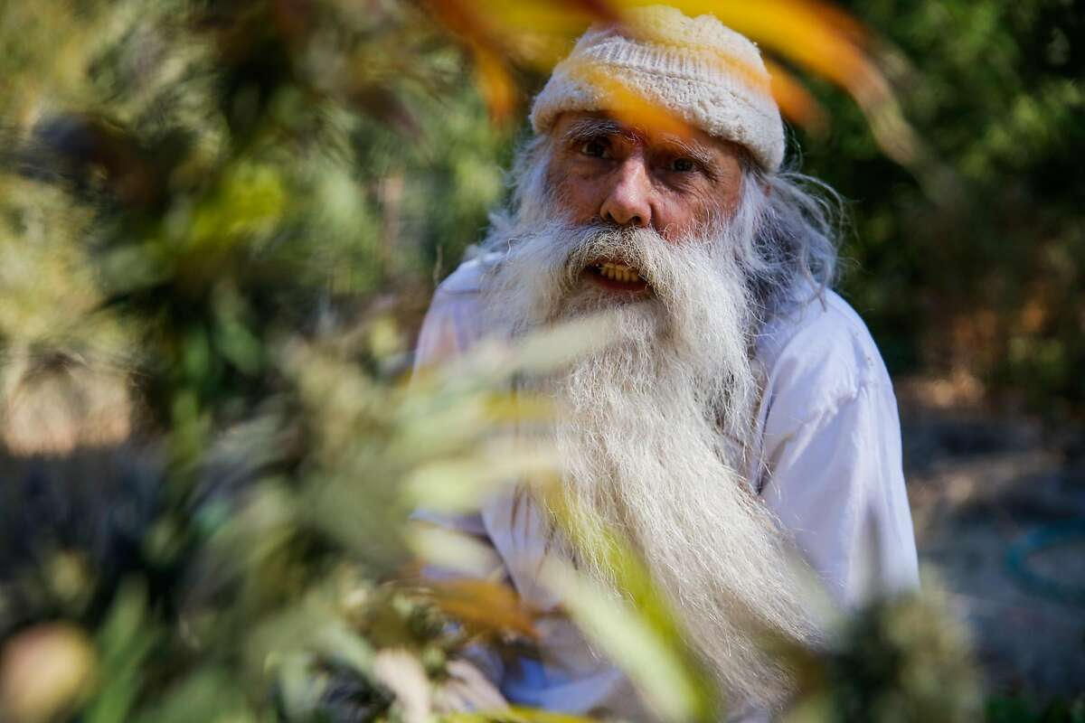 Swami Chaitanya, who co-founded the cannabis brand Swami Select, looks at a cannabis plant on his farm in Humboldt County on Oct. 8, 2017.