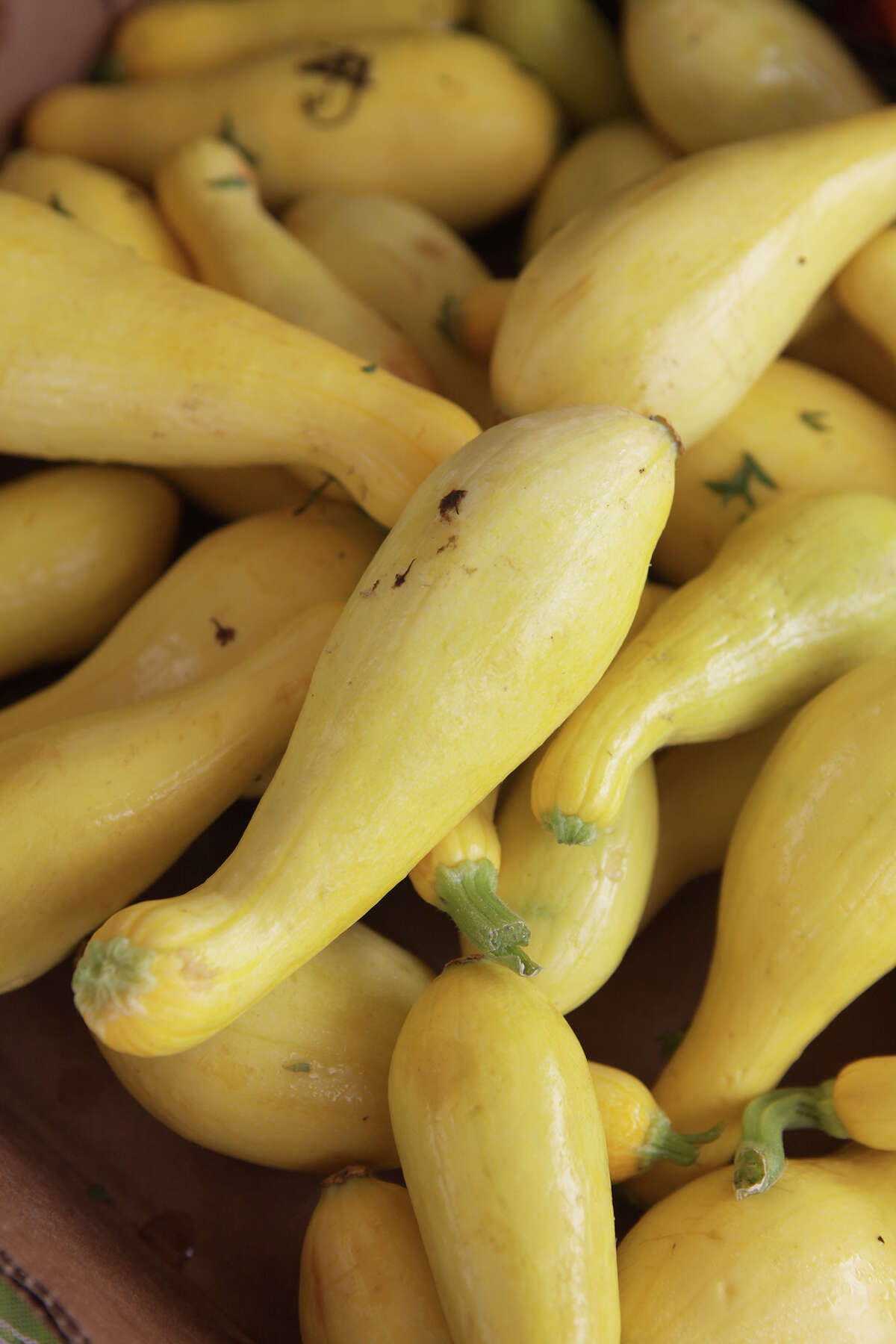 Edmonds Farms yellow summer squash at the Farmer's Market at Imperial in Sugar Land on Saturday, June 22, 2013. (Photo by Alan Warren)