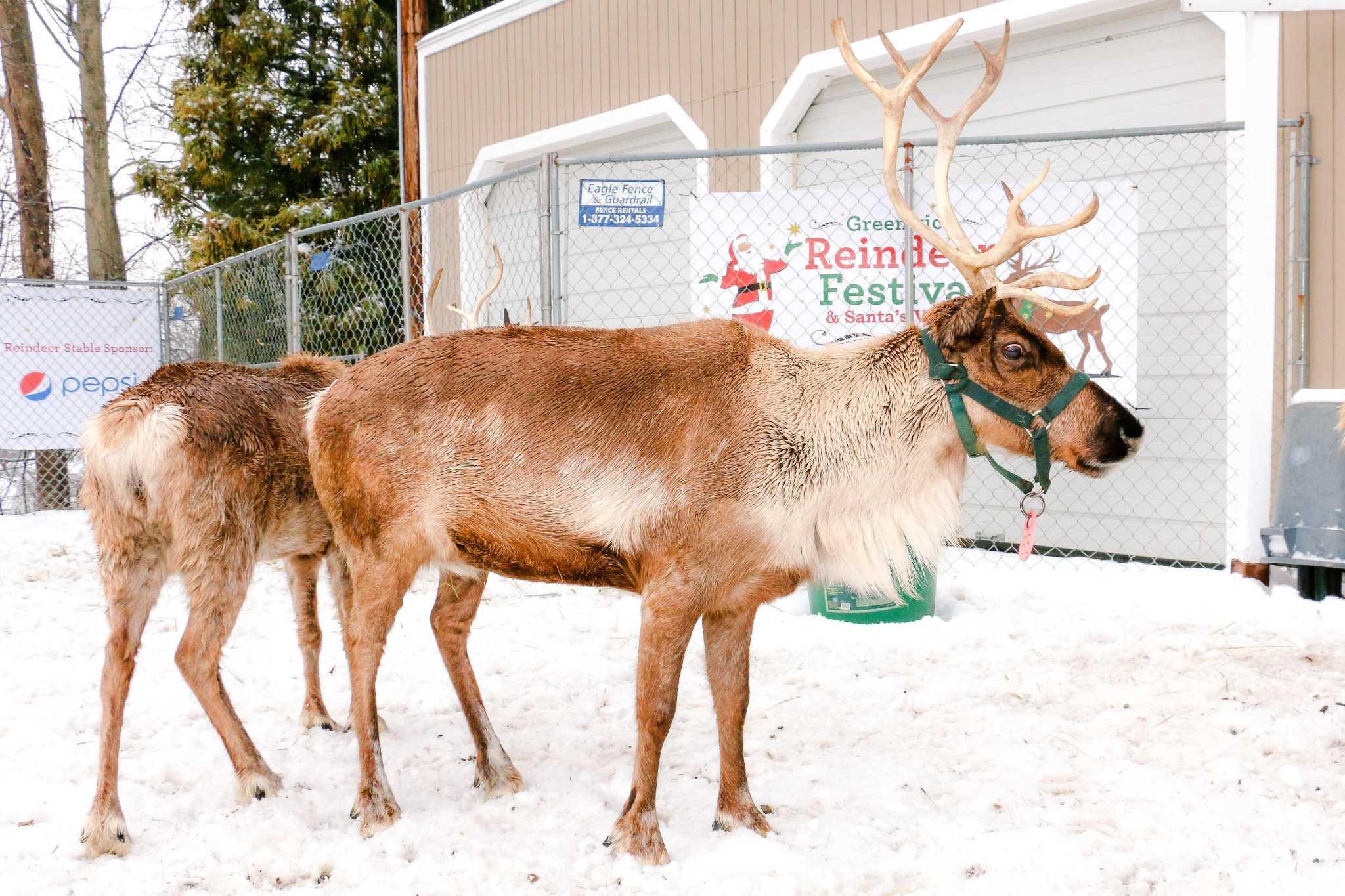 Reindeer Festival, Santa's Village set up shop in ... Reindeer Niche