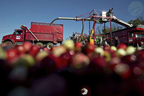Cranberries are harvested from a flooded bog in Camp Douglas, Wisconsin, on Oct. 18, 2017.