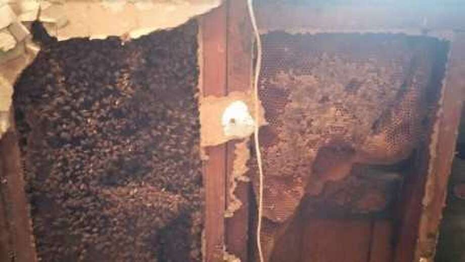 A Houston woman found a giant bees nest in her home during rebuilding efforts following Hurricane Harvey. Photo: Karen Knight