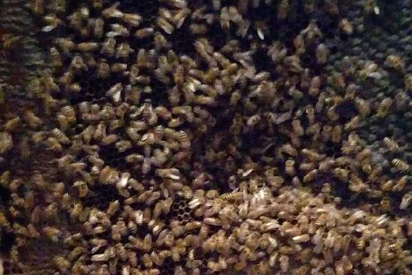 A Houston woman found a giant bees nest in her home during rebuilding efforts following Hurricane Harvey.