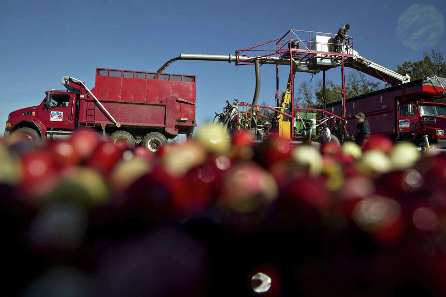 Cranberries are harvested from a flooded bog in Camp Douglas, Wisconsin in October. About 20 percent of annual sales of the fresh and processed fruit occurs during the week of Thanksgiving. But becoming a celebrity of the fruit world hasn't been enough to reverse the slowing pace of demand growth, leading the industry to take desperate measures to keep prices from collapsing. Photo: Daniel Acker /Bloomberg / 2017 Bloomberg Finance LP