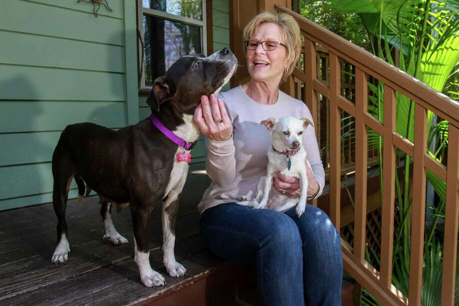 Rhonda Barron - holding her dog, Anna, while petting Stella, a rescued pitbull - rescues and helps transport pets to other states for adoption.          Rhonda Barron - holding her dog, Anna, while petting Stella, a rescued pitbull - rescues and helps transport pets to other states for adoption. Photo: Gary Fountain, For The Chronicle / Copyright 2017 Gary Fountain