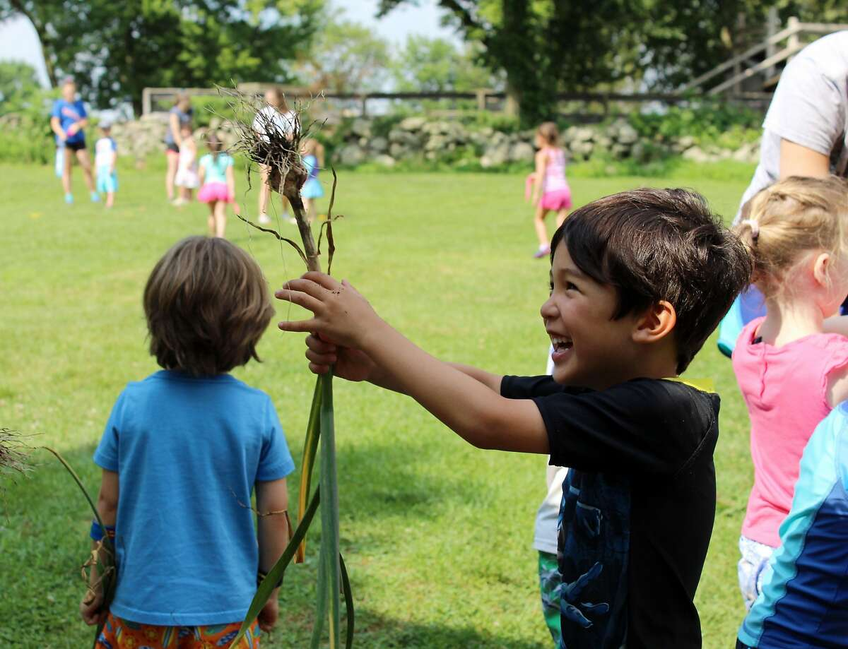 "Children from preschool to grade 7 participate in Ambler Farm's ""Adventures at the Farm"" summer program, July 12, 2017."