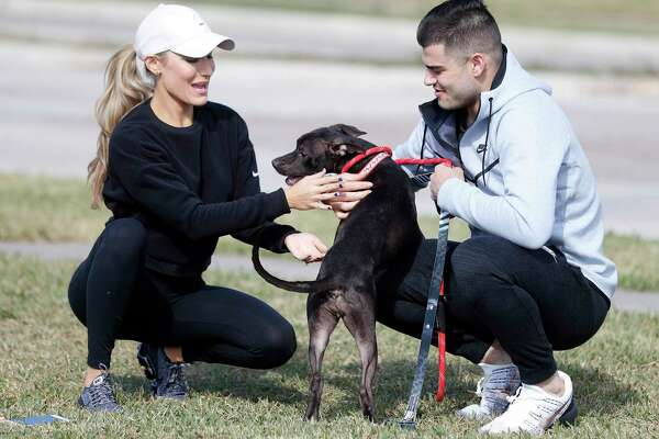 """Houston Astros pitcher Lance McCullers Jr. plays with """"Candy Corn"""" the dog, as he and his wife, Kara, walked dogs at the Houston Pets Alive pet rescue and adoption center at 8620 Stella Link Road, Monday, Nov. 20, 2017, in Houston. McCullers is passionate about helping animals in need of adoption."""