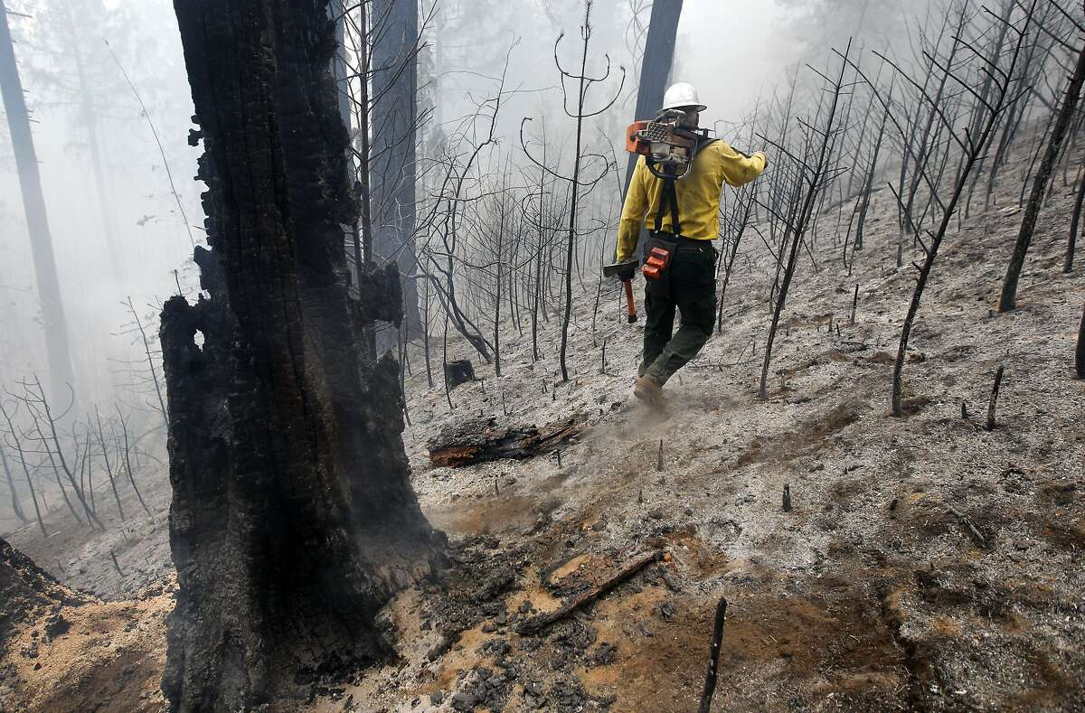 Faller Craig Morgan who is responsible for cutting down unstable burned trees walks through a burned area off of Packard Canyon Rd. near Groveland, Ca., as the 16,000 acre Rim Fire continues to grow on Wednesday August 21, 2013.