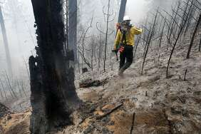 Craig Morgan, a faller who is responsible for cutting down unstable burned trees, walks through a burned area near Groveland (Tuolumne County) during the enormous 2013 Rim Fire.