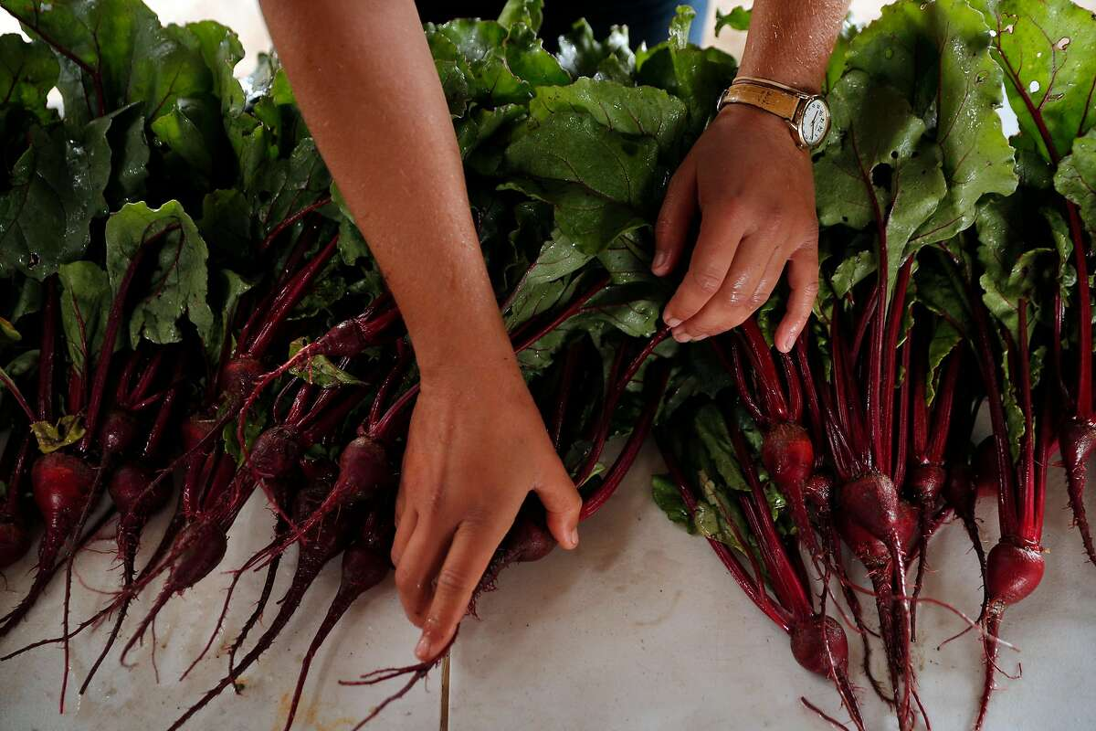 Laura Reynolds counts the beets, above, she just harvested at Gillyflower Farm, where she grows a salad-mix variety of vegetables on a 1-acre plot.