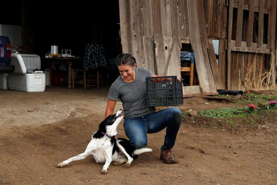 Laura Reynolds plays with Gilly, the farm's namesake, at Gillyflower Farm in Capay (Yolo County). Photo: Carlos Avila Gonzalez, The Chronicle