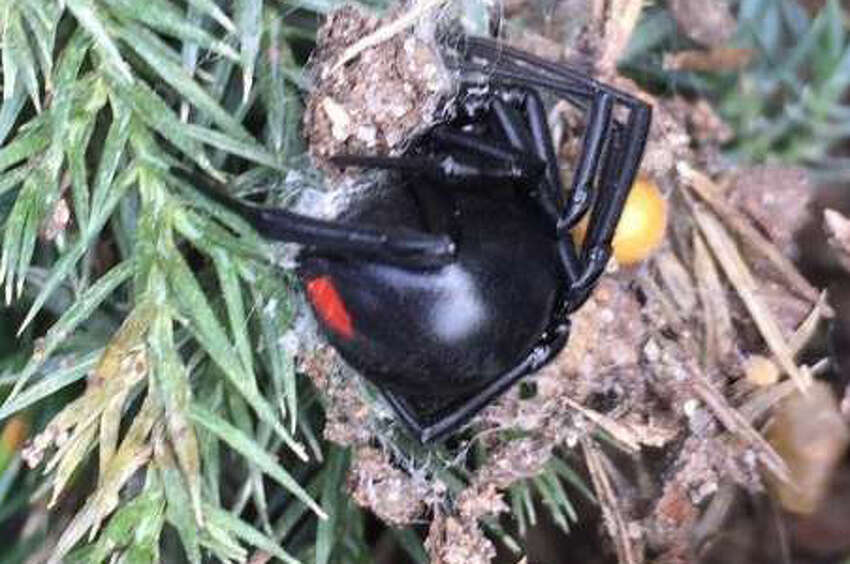 Preventing spiders | The best way to deal with spiders is by cutting off their food supply, so turn off any bright outdoor lights that can attract a snack. Keep areas decluttered and trim the weeds and tall grasses to take away their hiding spots.