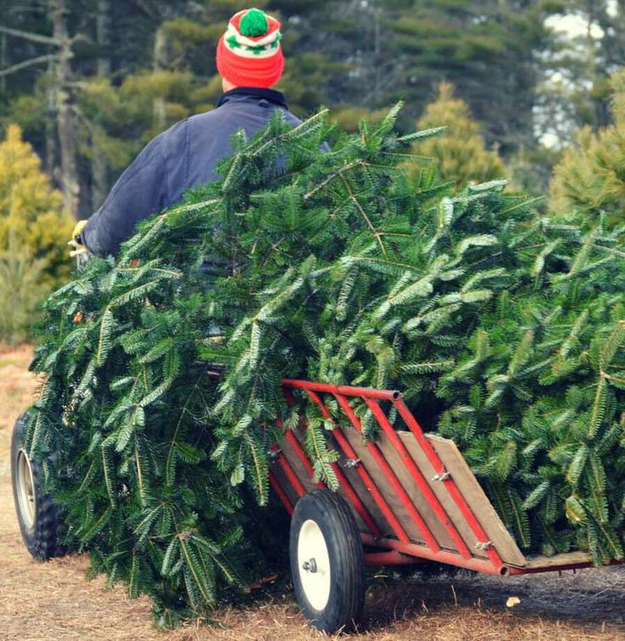 Christmas tree farms experiencing shortages this year