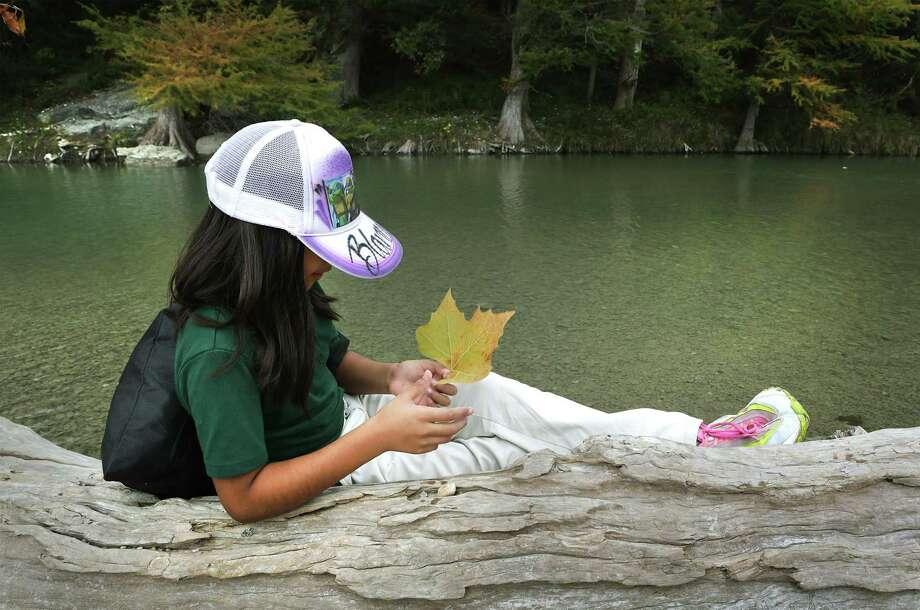 Blanca Alejandres, a 4th grader from Cotton Elementary School, admires a leaf she found along the banks of the Guadalupe River during a field trip to Guadalupe River State Park guided by Joey Fairuza, a Texas State University art professor who has been commissioned to paint a mural near Cotton Elementary School, on Thursday, Nov. 2, 2017. Photo: Bob Owen, Staff / San Antonio Express-News / ©2017 San Antonio Express-News