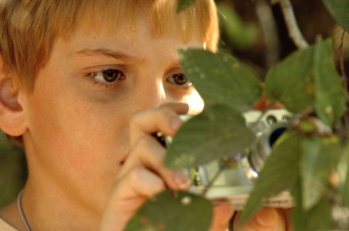 Aaron Haas, 9, stays focused on a spider at Green Spaces Alliance's Picture Your World nature photography clinic on Nov. 4, 2007.