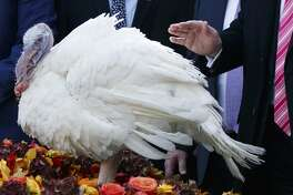 In this Nov. 21, 2017, photo, President Donald Trump pardons Drumstick during the National Thanksgiving Turkey Pardoning Ceremony in the Rose Garden of the White House in Washington. A poll shows more than a third of Americans dread the prospect of political talk over Thanksgiving. The survey by the Associated Press-NORC Center for Public Affairs Research shows that just 2 in 10 are eager to discuss politics. (AP Photo/Evan Vucci)