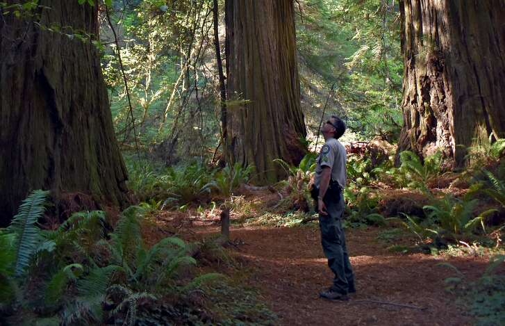 Brett Silver, Sector Superintendent for California State Parks, stands on the Mill Creek Trail, the only official route to the Grove of Titans, in Jedediah Smith Redwoods State Park on Thursday, Oct. 5, 2017 near Crescent City, Calif.