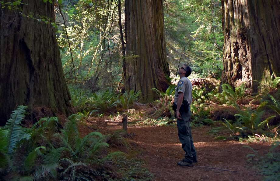Brett Silver, sector superintendent for California State Parks, stands on the trail to the once-hard-to-find Grove of Titans. Photo: Joanna Di Tommaso