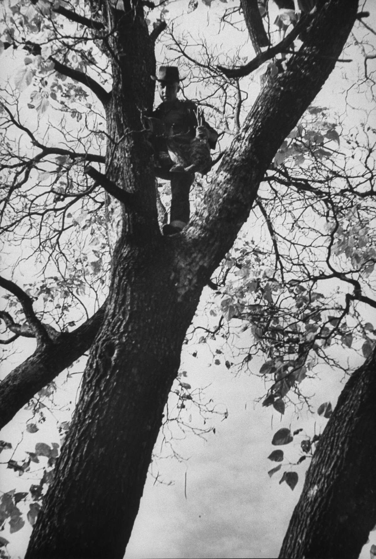 Up the elm tree after fast climb a farmer snares a bird that had found itself a handy roost in Yellville, Arkansas in 1952.