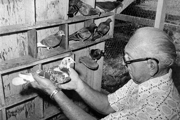 Bill Goodspeed, former Express-News photographer, holds one of of the homing pigeons that were used to send film from football games to be processed at the newspaper office.