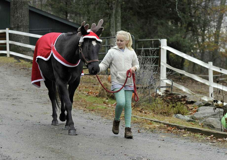 Annika Swabsin, 11, of Redding, walks Oliver Twist, a rescue horse at Rising Starr Horse Rescue in Redding, Wednesday, Nov. 22, 2017. Oliver, dressed in a holiday costume, is being walked to accustom him in preparation for walking in the Georgetown holiday parade Dec. 10. Photo: Carol Kaliff / Hearst Connecticut Media / The News-Times