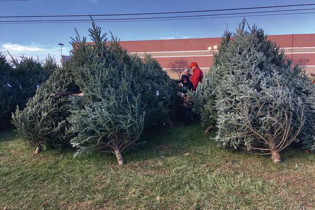 The Edwardsville Lions Christmas tree lot is open from 9 a.m. to 2 p.m. on Saturday and Sunday in front is Shop 'n Save on Troy Road. During the week, the lot is open Monday through  Friday from 4 to 8 p.. and on Friday from 2 to 8 p.m. Boy Scout Troop 1031 has been helping with the project for the past three years. Photo by Steve Horrell.