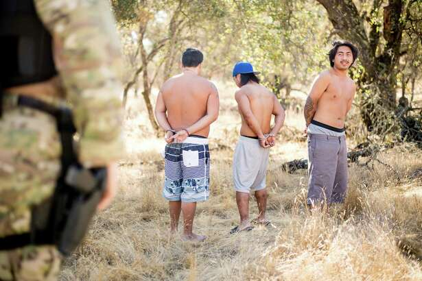 In this Sept. 29, 2017 photo, a sheriff's deputy guards three men arrested for allegedly cultivating marijuana in unincorporated Calaveras County, Calif. Marijuana has deeply divided the financially strapped county and it is among many now grappling with a pot economy where growers have become increasingly open about their operations and have begun encroaching on residential neighborhoods. (AP Photo/Noah Berger)