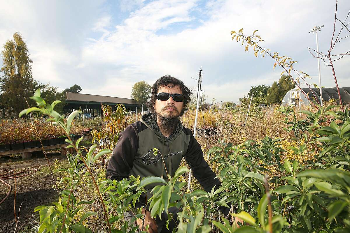 Sogorea Te` Land Trust is on the letthand side behind Jose Isordia and the plants of Planting Justice on Wednesday, November 22, 2017, in Oakland, Calif.