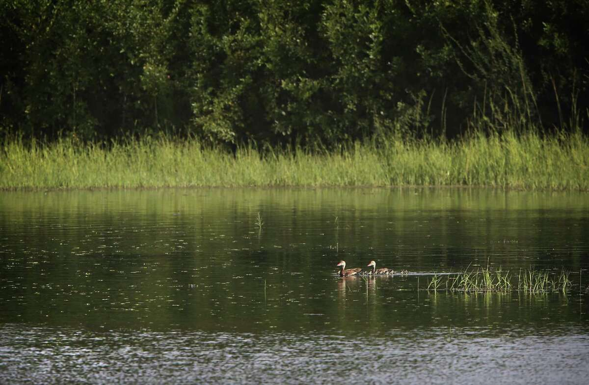 A pair of ducks swim on one of the lakes at Santa Ana National Wildlife Refuge near Alamo, TX, on Tuesday, July 18, 2017. Engineers have taken soil sample on the levee in the wildlife area in preparation to build the proposed border wall.