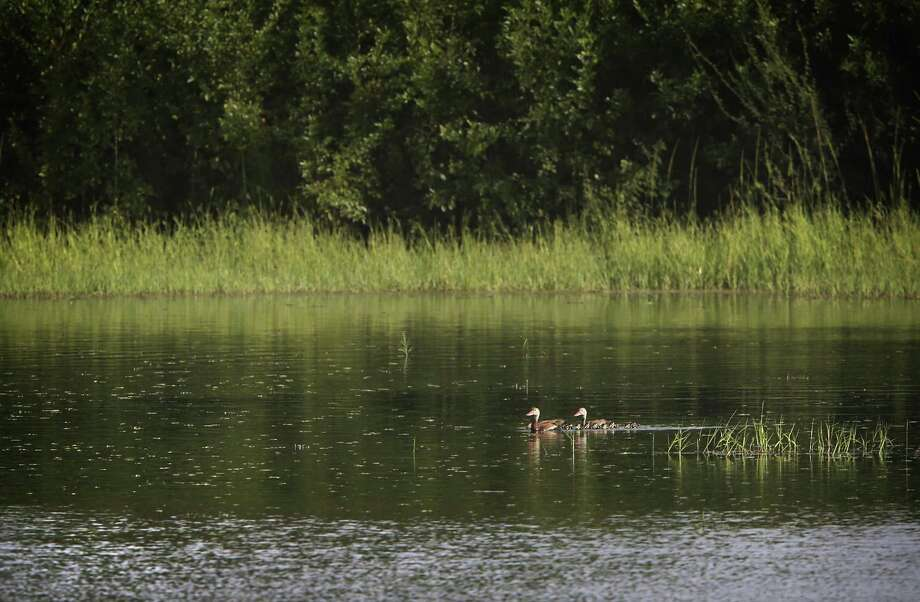 A pair of ducks swim on one of the lakes at Santa Ana National Wildlife Refuge near Alamo, TX, on Tuesday, July 18, 2017.  Engineers have taken soil sample on the levee in the wildlife area in preparation to build the proposed border wall. Photo: Bob Owen, Staff / San Antonio Express-News / ©2017 San Antonio Express-News