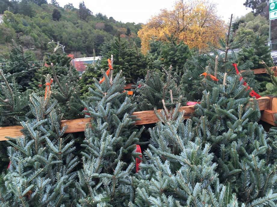 Christmas Tree Shortage.The Christmas Tree Shortage Is Real Here S Why Your Tree