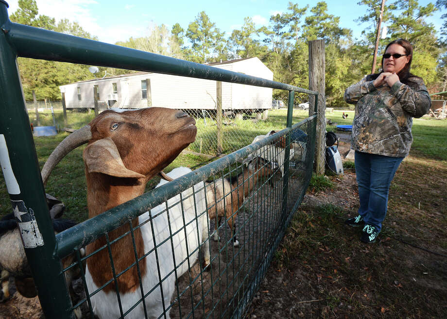 Deanna Coburn owner of Cozy Critters Farm talks about the long-term effects Tropical Storm Harvey continues to have on her animals months after the storm.  Photo taken Monday, November 21, 2017 Guiseppe Barranco/The Enterprise Photo: Guiseppe Barranco, Photo Editor / Guiseppe Barranco ©