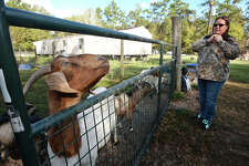 Deanna Coburn owner of Cozy Critters Farm talks about the long-term effects Tropical Storm Harvey continues to have on her animals months after the storm.  Photo taken Monday, November 21, 2017 Guiseppe Barranco/The Enterprise