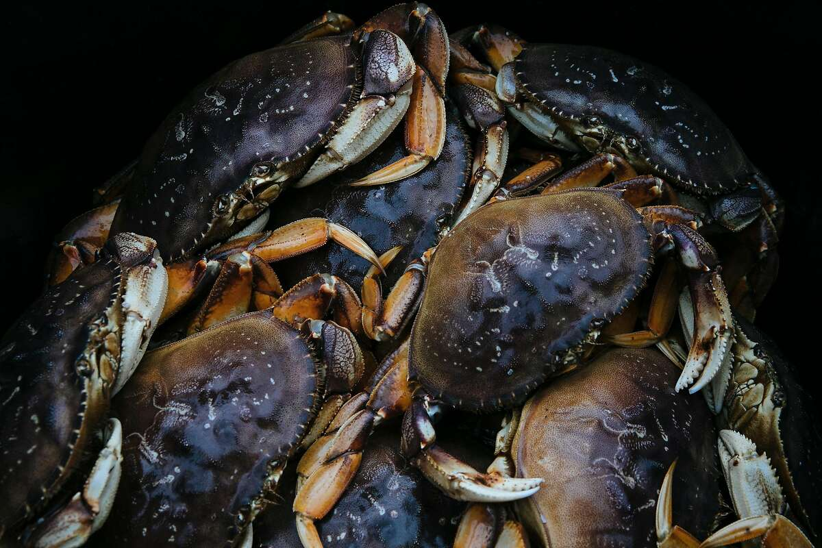 """Dungeness crab from the boat, """"New Easy Rider,"""" wait to be unloaded at Pier 45 in San Francisco, Calif. Wednesday, November 15, 2017."""