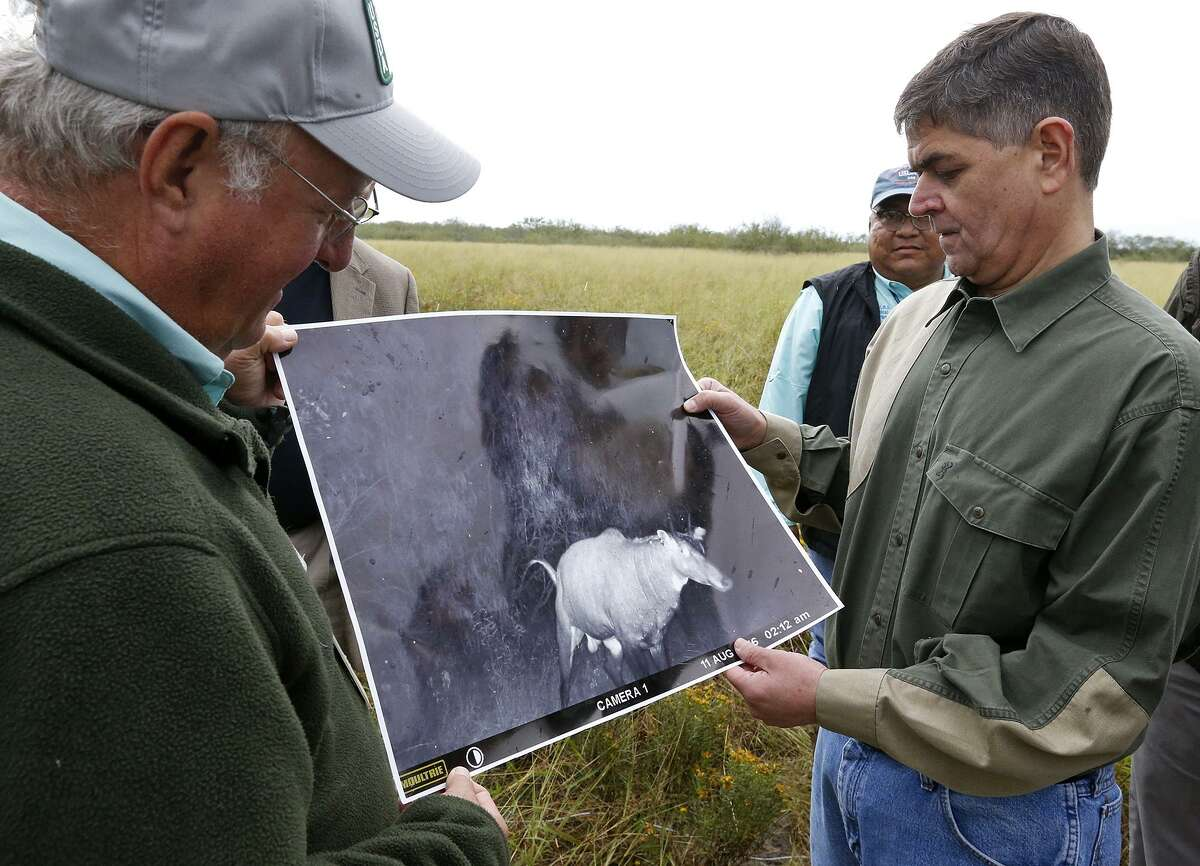 U.S. Department of Agriculture research entomologist John A. Goolsby, left, shows U.S. U.S. Rep. Filemon Vela, D-Brownsville, a photo of nilgai visiting a latrine on Russell Ranch in Rio Hondo. Goolsby is trying a method of eradicating cattle fever ticks in South Texas by using nematodes emitted by the nilgai sprayer.