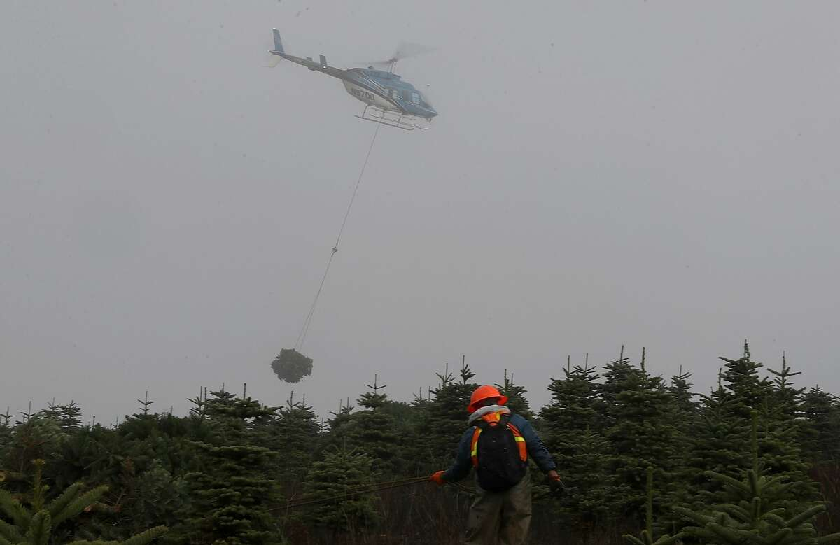 A helicopter pulls a bundle of freshly harvested Christmas trees from a field at the Holiday Tree Farms on November 18, 2017 in Monroe, Oregon. The Christmas tree harvest is underway at Holiday Tree Farms, the biggest grower of holiday trees in the United States, as workers harvest and ship an estimated one million trees ahead of the Christmas holiday.