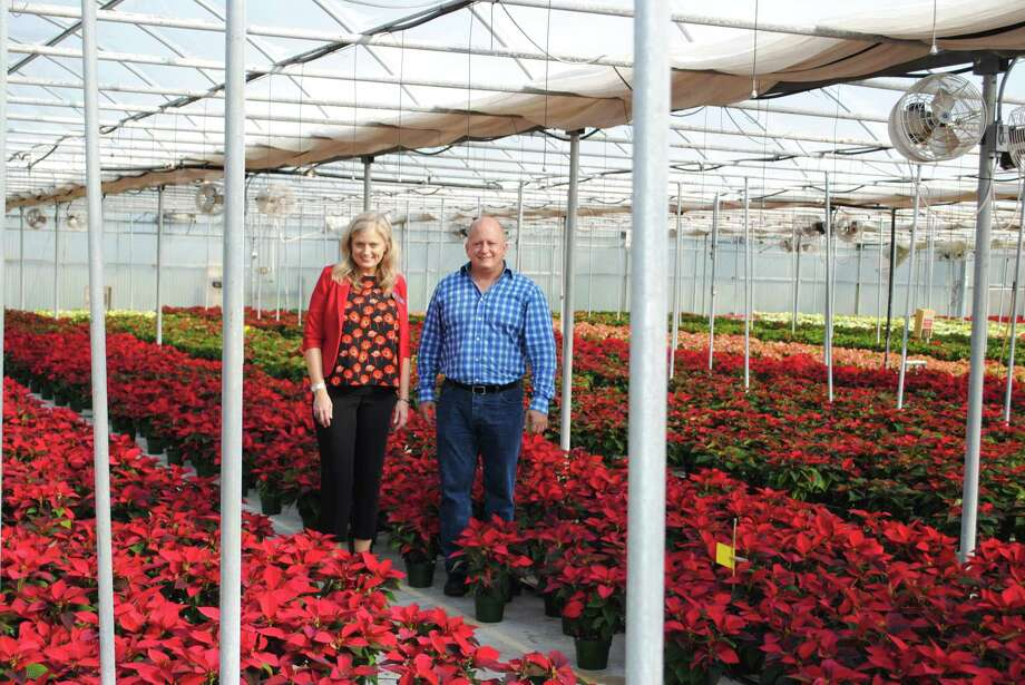 Brookwood Community is gearing up for its annual poinsettia plant fundraiser. The community foradults with special needs is hoping the sales willfund more than $500,000 of the community's annual operating budget. Photo: Courtesy Photo