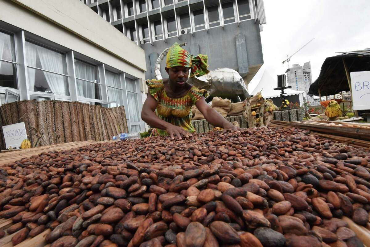 A man dressed as a woman in a traditional garment selects cocoa beans on the closing day of the national cocoa and chocolate days on October 1, 2017 in front of the building of the 'Caisse ivoirienne de stabilisation des produits agricoles' (Ivory Coast's Agricultural Stabilization Fund) in Abidjan. With