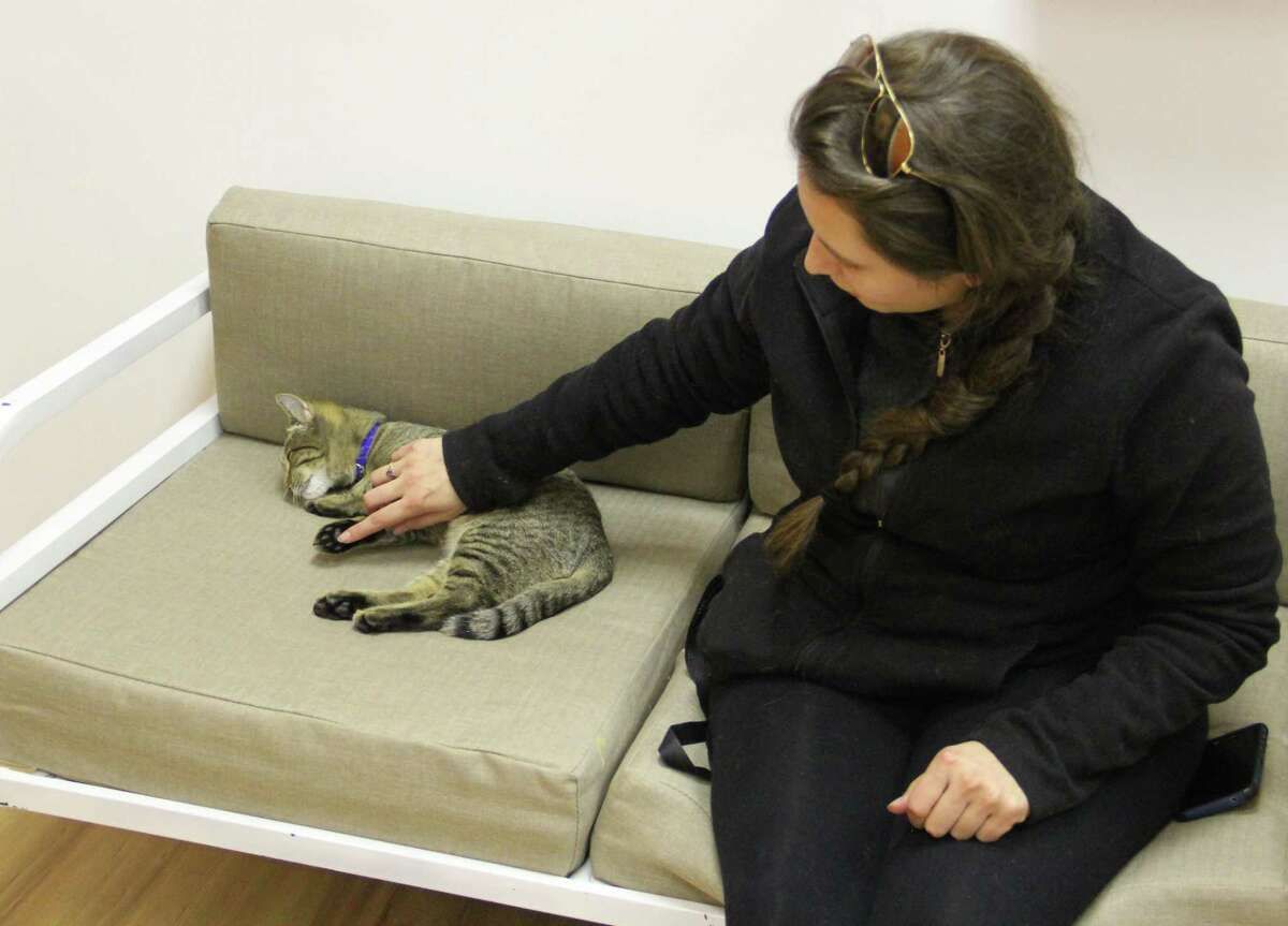 Rebekah Meyers, of Hamden, visits the Mew Haven Cat Cafe in New Haven on Tuesday afternoon.