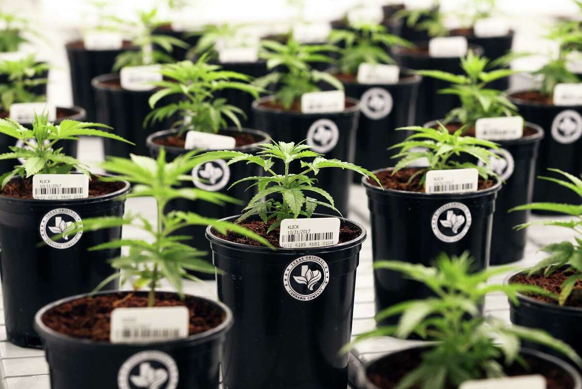 Compassionate Cultivation's first strain of plants are named for state Rep. Stephanie Klick, R-Fort Worth, who sponsored legislation creating the Compassionate Use Program.